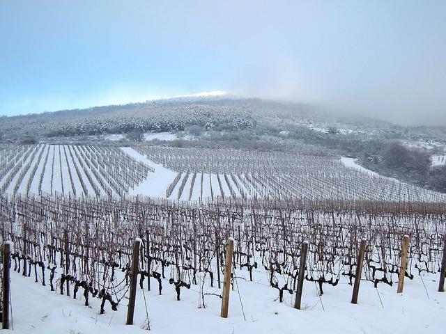 vineyard-2683692_640