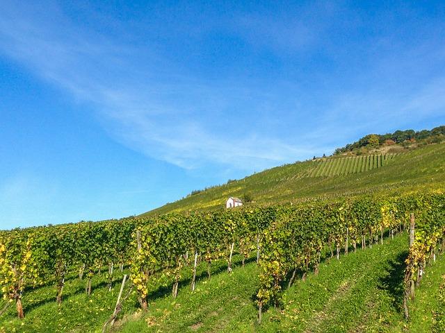 vineyard-727988_640
