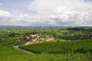 vineyards-3094144_1920