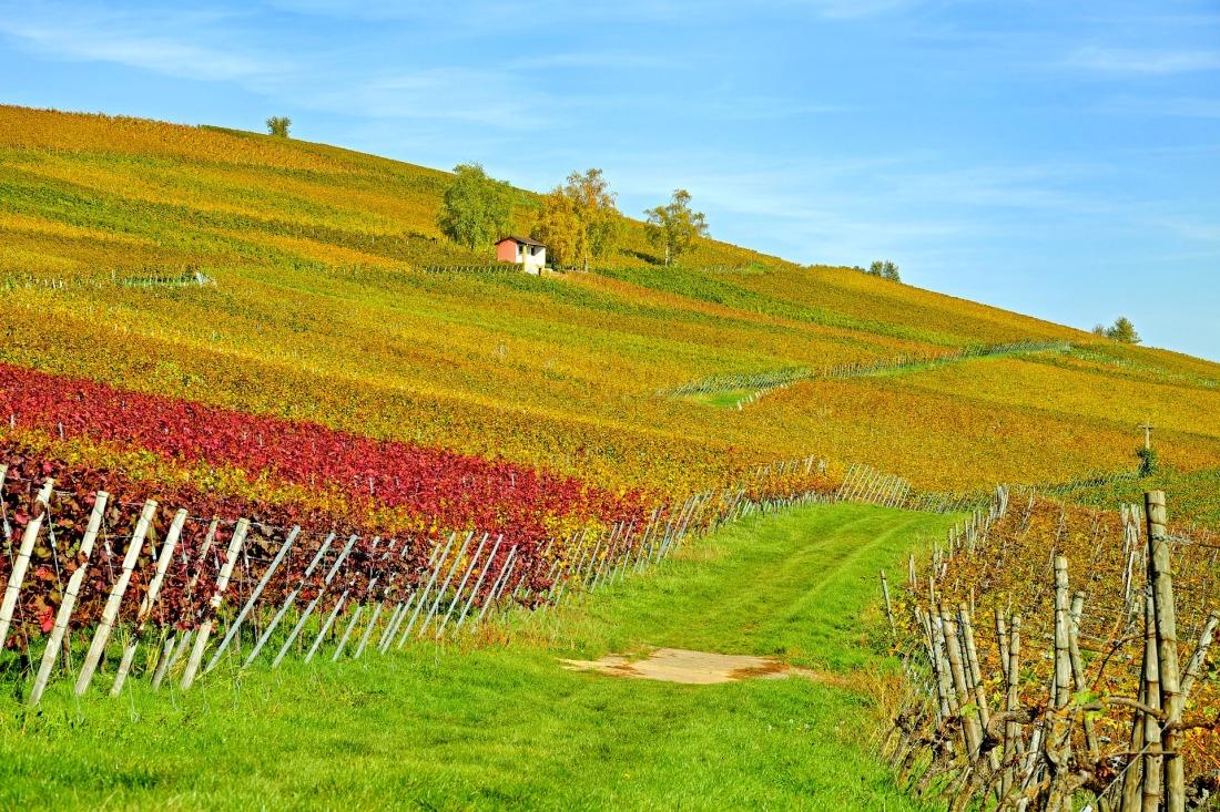 vineyard-2860941_1920