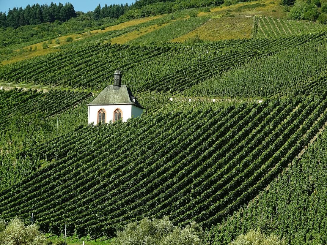 vineyard-973569_1920.jpg